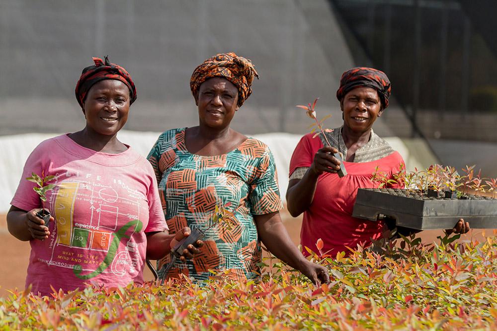 Employment in Ghana
